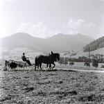 Heuernte in Ruhpoling September 1938